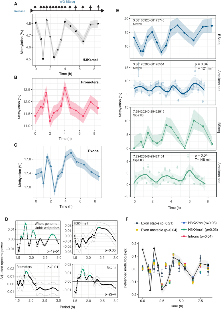 """Oscillatory Dynamics of DNA Methylation during Transition from Naïve to Primed Pluripotency In Vitro Naïve ESCs were transferred to primed conditions in two independent """"2i release"""" experiments. In the initial experiment, triplicate samples were collected at each time point, and BS-seq and RNA-seq libraries were prepared (A–F). In the second, single samples were collected at each time point and AmpBS-seq data are presented in (D). (A) Average DNA methylation at H3K4me1 sites over the time course. For the average, we took into account 50% of enhancers with the highest coverage depth over the time course (n = 10,324). (B) Average methylation at promoter regions (n = 637) and (C) exons (n = 4,990). (D) Average spectral densities for different genomic features calculated from whole genome BS-seq data (see also Figure S4 C and STAR Methods ). Green dots denote significant enrichment of a given period (p"""