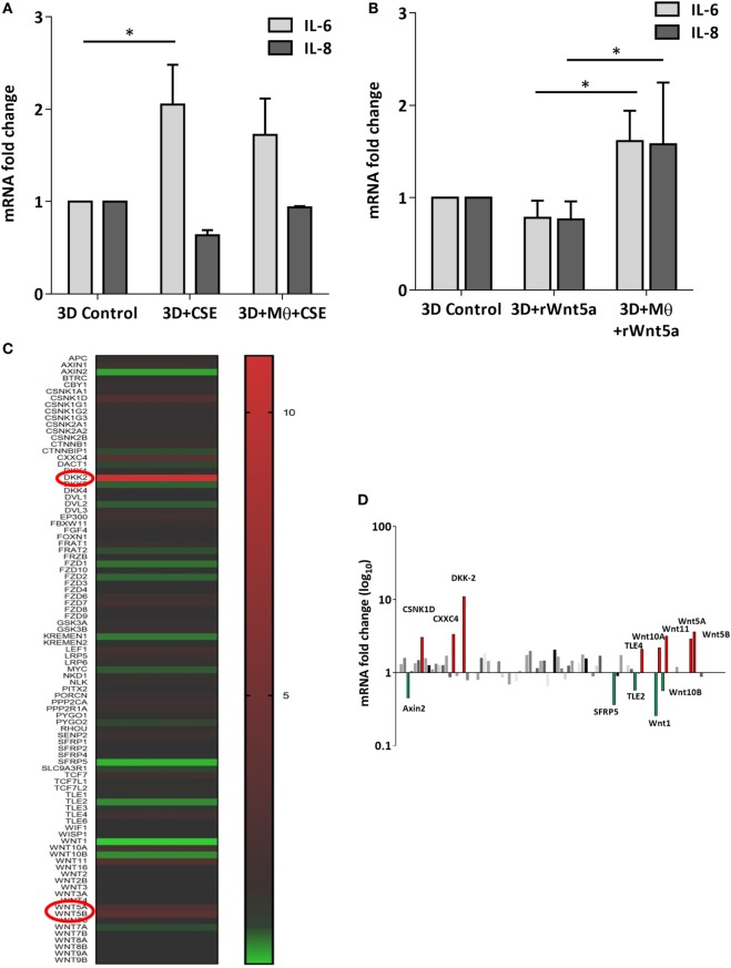 Inflammatory cytokine and Wnt mRNA levels in primary human 3D lung aggregate cultures and human macrophages (M) after cigarette smoke extracts (CSE) exposure. (A) IL-6 and IL-8 inflammatory cytokine mRNA levels in control and CSE exposed (48 h) lung aggregate cultures, containing and not containing M. (B) IL-6 and IL-8 inflammatory cytokine mRNA levels in control and rWnt5a (1 µg/ml) treated lung aggregate cultures, containing and not containing M. (C) <t>Taqman</t> array heat map analysis of pooled ( n = 4) <t>cDNA</t> of human M compared with control. M were treated with CSE for 3 h. (D) Changes in mRNA levels of Wnt signaling pathway genes measured by Taqman Array analysis using pooled ( n = 4) cDNA samples of human M compared with control.