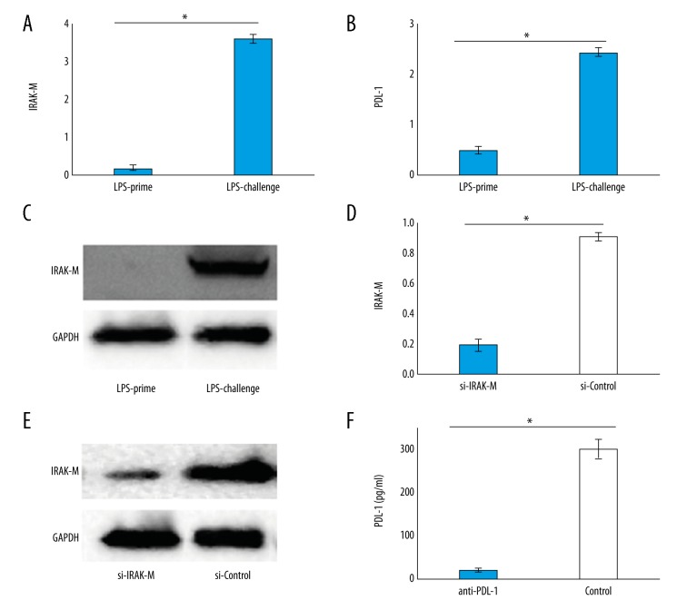 Expression of IRAK-M and PDL-1 before and after the IRAK-M and PDL-1 inhibition of BMDCs. ( A, C ) Quantitative <t>PCR</t> analysis and western blot of IRAK-M expression of LPS primed or challenged DCs (n=3). ( B ) The expression of PDL-1 in LPS primed or challenged DCs (n=3). ( D ) IRAK-M mRNA and ( E ) protein expression after the interference using siRNA or <t>si-RNA-controls</t> to IRAK-M (n=3). ( F ) PDL-1 concentration of ELISA after using anti-PDL-1 antibody to neutralize supernatant PDL-1 (n=3). The expression of the error bars represents ±S.D. (* P