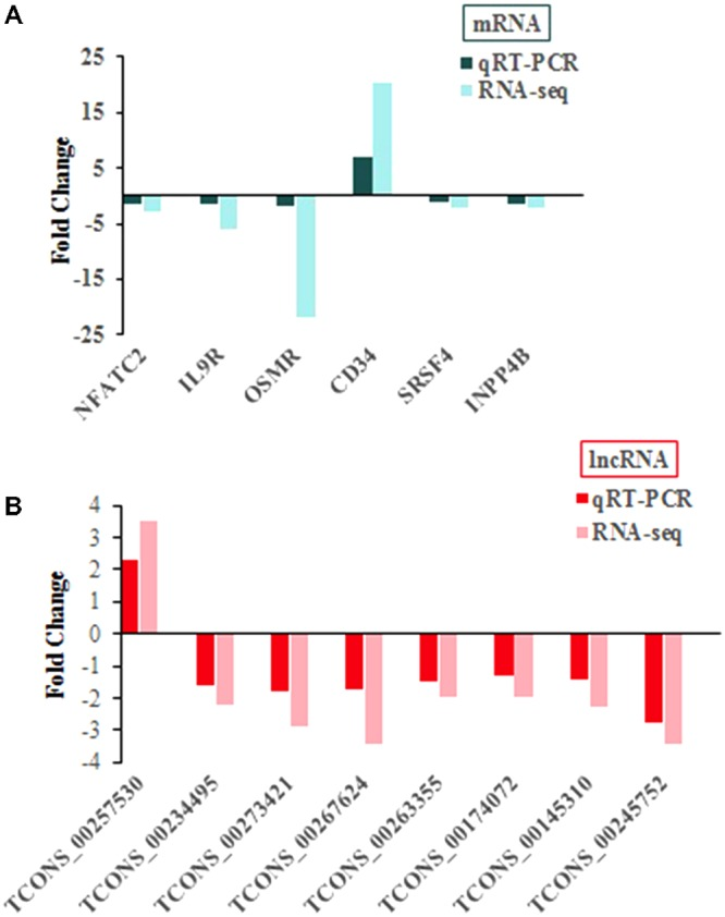 qRT-PCR confirmation of sequencing results in chickens with or without ALV-J infection. (A) For mRNA. (B) For lncRNA.