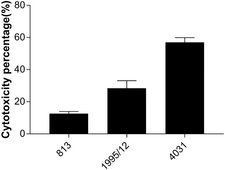 Cytotoxic effect of carbapenem-susceptible and carbapenem-resistant A . baumannii strains on <t>HaCaT</t> keratinocyte cells. Cytotoxic levels caused by carbapenem-susceptible strain 813 and carbapenem-resistant strains 1995/12 and 4031 on HaCaT cells were measured by <t>LDH</t> assay. Values are the means from results obtained in triplicate. Error bars represent the standard deviation of the mean value.