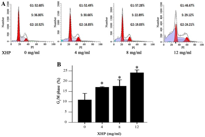Effect of XHP on the cell cycle distribution of MDA-MB-231 cells. (A) MDA-MB-231 cells were treated with different concentrations of XHP (4, 8 and 12 mg/ml) for 48 h, and then harvested to determine cell cycle distribution by flow cytometry analysis. Cells treated with medium (0 mg/ml, XHP) were used as a control. (B) XHP induced cell cycle arrest at G 2 /M phase in a dose-dependent manner. Values represent the mean ± standard deviation (n=3). *P