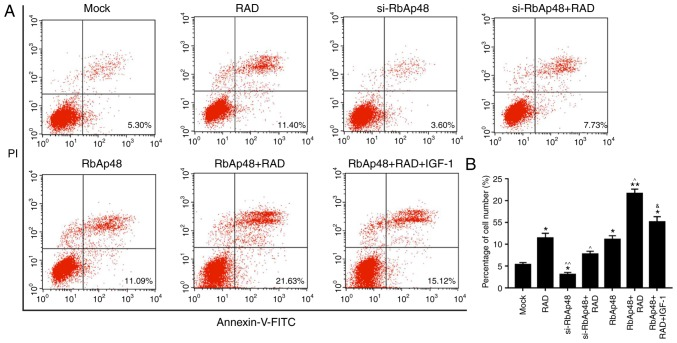 si-RbAp48 represses cell apoptosis, and RbAp48 in combination with radiation promotes cell apoptosis via PI3K/Akt pathway inhibition. (A) Flow cytometry analysis was performed and (B) the percentage of apoptotic cells was calculated. IGF-1 was used as a PI3K/Akt pathway agonist. *P