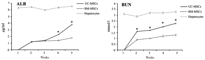 Detection of secreted albumin and blood urea nitrogen by ELISA. The ALB and BUN concentration of UC-MSCs and BM-MSCs culture supernatants collected on weeks 1, 2, 3, 4 and 5 following hepatic differentiation were measured. The medium of hepatocyte was measured as a control. Each bar represents the mean ± standard deviation (n=3). *P
