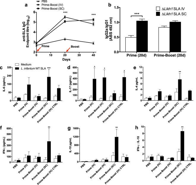 Humoral and cellular immune responses induced by different schemes of vaccination with Δ Likh1 . Humoral immune response was evaluated by conventional ELISA measurement of serum levels of different isotypes of Li WT SLA-specific antibodies <t>(IgG</t> total , IgG 1 and IgG 2a ). ( a ) Seroconversion of mice 20 days post-immunization with Δ Likh1 . ( b ) <t>IgG2a:IgG1</t> ratio between IV and SC prime-boosted groups. ( c – h ) Levels of cytokines in pg/mL in the supernatant of Li WT SLA-stimulated splenocytes. The concentration of Li WT SLA in the experiments was 25 μg/mL and splenocytes were stimulated for 72 h. CpG ODN at 5 μg/mL was used as a positive control of a Th1-response and α-MEM medium with 20% of FBS was used as negative control. Cytokines were measured by flow cytometry with the BD Cytometric Bead Array (CBA) Mouse Th1/Th2/Th17 Cytokine Kit (BD Biosciences, San Jose, CA, USA) following manufacturer instructions. The acquisition and data analyses were made in BD FACSVerse Instrument and FCAP Array Software v3. The detection limit of IL-2, IL-4, IL-6, IFN-γ, TNF, IL-17A and IL-10 cytokines were respectively 0.1; 0.03; 1.4; 0.5; 0.9; 0.8 and 16.8 pg/mL as well as cytokines secreted by Li WT SLA-stimulated splenocytes from immunized mice. Data are shown as means ± SE. Statistical analyses used One-way-ANOVA followed by Bonferroni's multiple comparison test. *** p