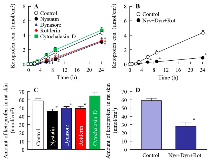 Effect of endocytosis on the transdermal penetration of ketoprofen released from the KET-NPs formulation. ( A ) Effect of endocytosis inhibitors (nystatin, dynasore, rottlerin and cytochalasin D) on the penetration from the KET-NPs formulation through the skin; ( B ) Changes in the transdermal penetration in the KET-NPs formulation by multi-treatment with three inhibitors (nystatin, dynasore and rottlerin; Nys + Dyn + Rot); ( C ) Effect of endocytosis inhibitors (nystatin, dynasore, rottlerin and cytochalasin D) on the amount of ketoprofen in rat skin 24 h after application of the KET-NPs formulation; ( D ) Changes in drug accumulation from the KET-NPs formulation by multi-treatment with three inhibitors (nystatin, dynasore, rottlerin; Nys + Dyn + Rot). The ketoprofen concentration in rat skin was measured 24 h after application of the KE-NPs formulation. Mean ± S.E. n = 6–8. * p