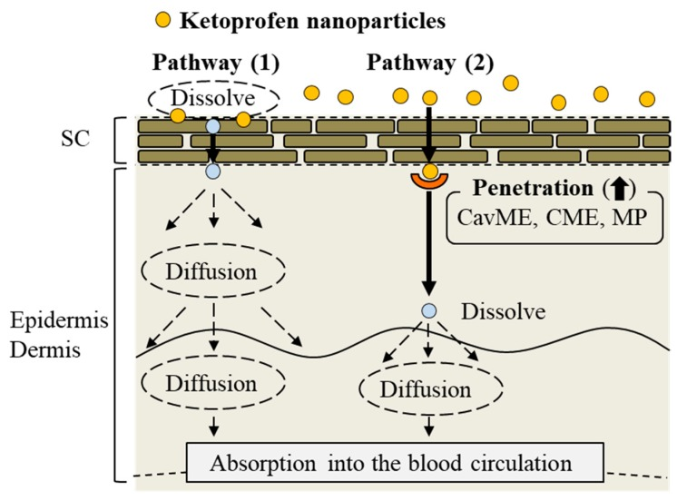 Mechanism for the percutaneous absorption process from the transdermal formulation containing ketoprofen nanoparticles.