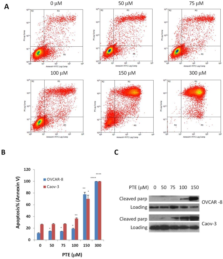 Pterostilbene induces cell <t>apoptosis.</t> OVCAR-8 and Caov-3 cells were treated with vehicle and PTE (25–300 μm) for 48 h. Apoptosis was determined by flow cytometry using <t>annexin</t> V and PI staining ( A , B ) or by Western blot for the expression of cleaved poly-ADP ribose polymerase (PARP) ( C ). Results are representative of 3 or more preparations. *, p