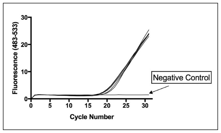PCR-HRMA amplification curves of vancomycin-resistant (VRE) and -sensitive (VSE) E faecalis and E faecium . Amplification curves for VRE ( E faecium ATCC 19434, E faecalis ATCC 51299 and E faecalis ATCC 29212) and the VSE standard strains ( E faecalis NCTC 77 and E faecium NCIMB 2699). Each assay contained 250 pg of bacterial DNA. B fragilis was also included as the reference organism for generating VRE/VSE difference curves. B fragilis amplifies with the same efficiency as the Enterococcus strains. Nuclease-free water was used as a negative control (NC).