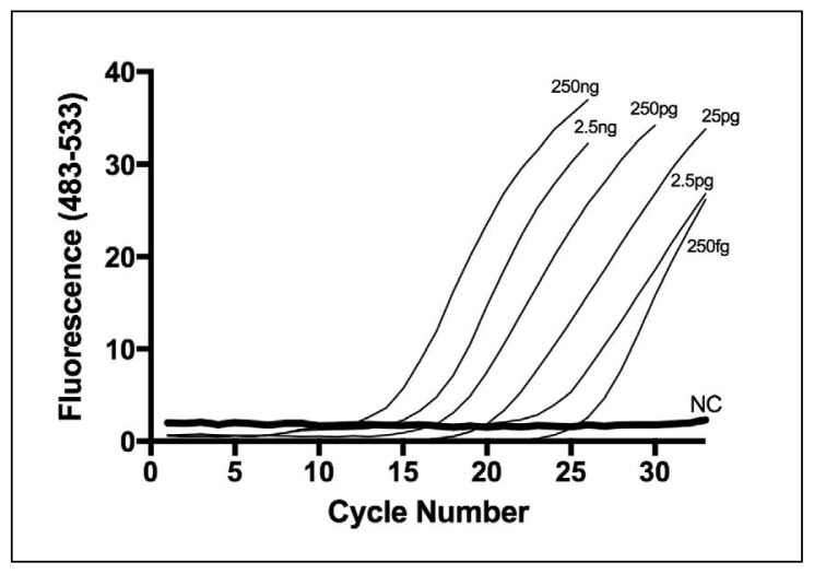 Concentration dependence of RT-PCR-HRMA using the V1 primer set: Amplification curves for different quantities of DNA from VRE E faecalis ATCC 29212 (250 fg to 250 ng) using the V1 primer pair.