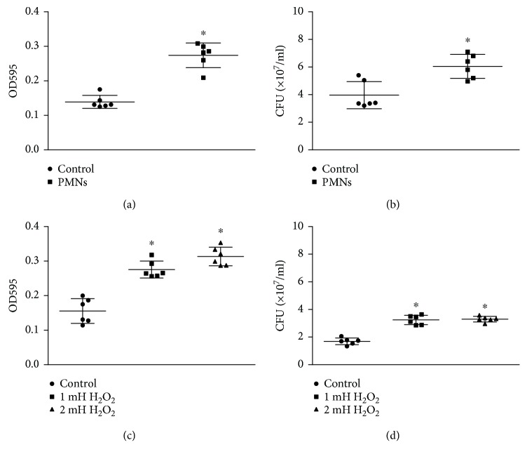 Effect of PMNs and H 2 O 2 on the adhesion of mucoid P. aeruginosa FRD1. The error bars indicate standard deviations. Control: control group; PMNs: FRD1 group treated with PMNs; 1 mM H 2 O 2 : FRD1 group treated with 1 mM H 2 O 2 ; 2 mM H 2 O 2 : FRD1 group treated with 2 mM H 2 O 2 . (a) Quantification of biofilm formation using crystal violet staining. Cells were grown in Jensen's medium for one day, in the presence of PMNs. PMNs increased the adhesion of P. aeruginosa FRD1. (b) The effect of PMNs on the number of viable cells is expressed in colony-forming units (CFUs). (c) Quantification of biofilm formation by crystal violet staining. H 2 O 2 increased the adhesion of P. aeruginosa FRD1. (d) The effect of H 2 O 2 on the number of viable cells is expressed in colony-forming units (CFUs). Data are presented as the mean ± SD ( n = 6 in each treatment). ∗ P