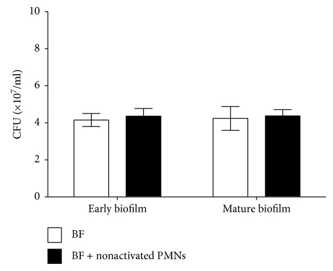 Effect of nonactivated PMNs on viable cells of biofilms of mucoid P. aeruginosa FRD1. The numbers of viable cells in biofilms treated with PMNs are expressed in colony-forming units (CFUs). The error bars indicate standard deviations. BF: biofilm without PMNs; BF + nonactivated PMNs: biofilm treated with nonactivated PMNs. Data are presented as the mean ± SD ( n = 6 in each treatment).
