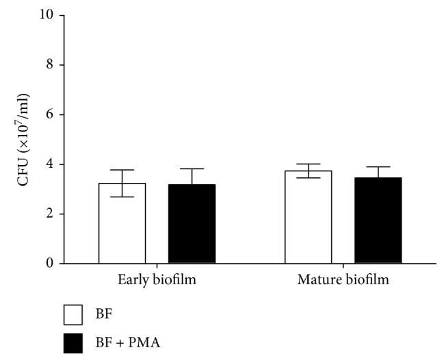 Effect of PMA on viable cells of biofilms of mucoid P. aeruginosa FRD1. The numbers of viable cells in biofilms treated with PMA are expressed in colony-forming units (CFUs). The error bars indicate standard deviations. BF: biofilm without PMA; BF + PMA: biofilm treated with PMA (100 ng/ml). Data are presented as the mean ± SD ( n = 6 in each treatment).