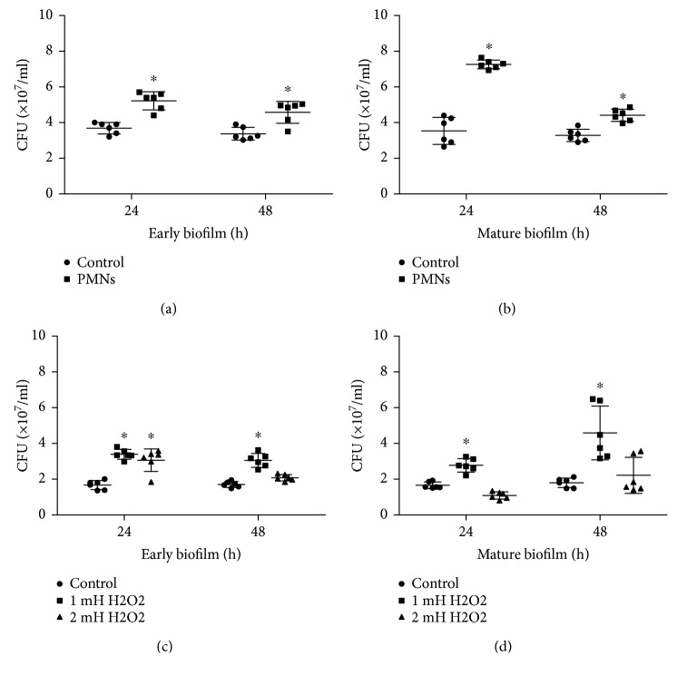 Effect of PMNs and H 2 O 2 on viable cells of biofilms of mucoid P. aeruginosa FRD1. The error bars indicate standard deviations. Control: control group; PMNs: FRD1 biofilm group treated with PMNs; 1 mM H 2 O 2 : FRD1 biofilm group treated with 1 mM H 2 O 2 ; 2 mM H 2 O 2 : FRD1 biofilm group treated with 2 mM H 2 O 2 . (a, b) The numbers of viable cells in biofilms treated with PMNs are expressed in colony-forming units (CFUs). (c, d) The numbers of viable cells in biofilms treated with H 2 O 2 are expressed in colony-forming units (CFUs). Data are presented as the mean ± SD ( n = 6 in each treatment). ∗ P