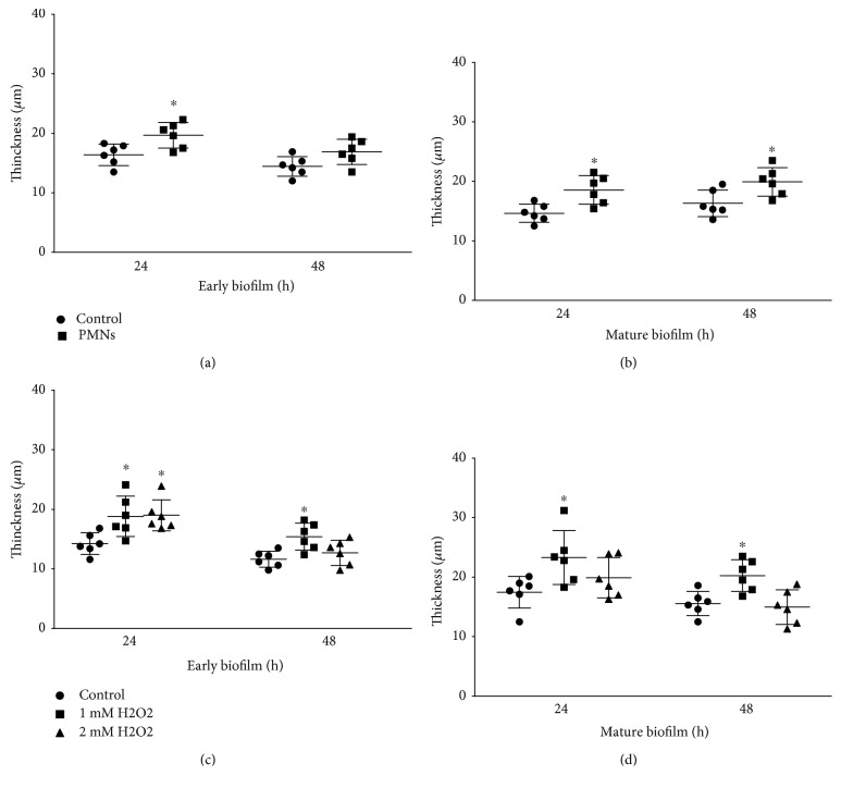 Effect of PMNs and H 2 O 2 on thickness of biofilms of mucoid P. aeruginosa FRD1. The error bars indicate standard deviations. Control: control group; PMNs: FRD1 biofilm group treated with PMNs; 1 mM H 2 O 2 : FRD1 biofilm group treated with 1 mM H 2 O 2 ; 2 mM H 2 O 2 : FRD1 biofilm group treated with 2 mM H 2 O 2 . (a, b) The thickness of biofilms treated with PMNs was determined using confocal laser-scanning microscopy. (c, d) The thickness of biofilms treated with H 2 O 2 was determined using confocal laser-scanning microscopy. Data are presented as the mean ± SD ( n = 6 in each treatment). ∗ P
