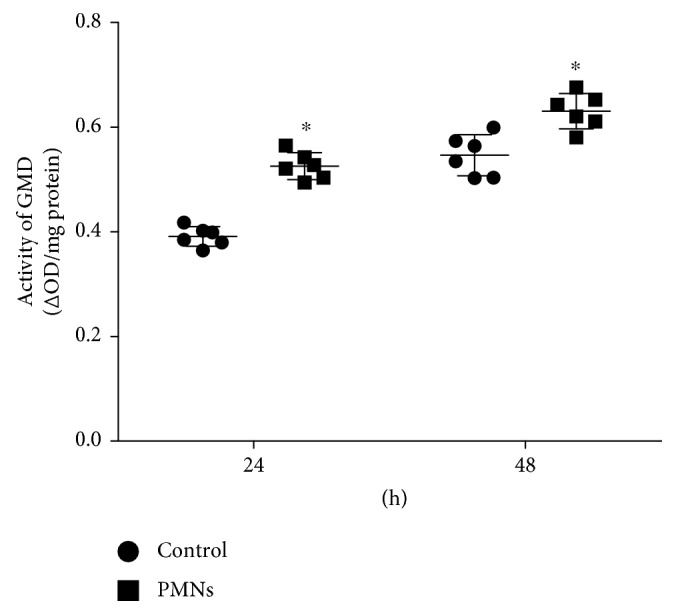 Effect of PMNs on GMD activity. GMD: GDP-mannose dehydrogenase; Control: P. aeruginosa FRD1 biofilm grown for 24 hours or 48 hours without PMNs; PMN: P. aeruginosa FRD1 biofilm treated with PMNs for 24 hours or 48 hours. Activities of GMD in FRD1 biofilms treated with PMNs were significantly different from those in FRD1 biofilms without PMNs. Data are presented as the means ± SD ( n = 6 in each treatment). ∗ P