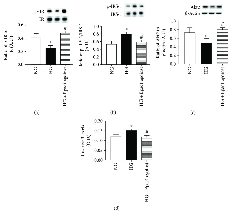 (a, b) Western blotting for the ratio of phosphorylated insulin receptor on tyrosine 1150/1151 (p-IR) and IRS-1 Ser307 (p-IRS-1) to total protein. (c) Western blotting for the ratio of Akt2 to β -actin. (d) <t>ELISA</t> results for cleaved <t>caspase</t> 3 levels. ∗ P