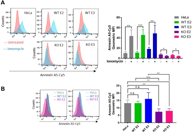 TMEM16F regulates lipid movement in HeLa cells. (A) TMEM16F-knockout (KO) cells do not externalise PS in response to ionomycin stimulation. Wild-type (WT), matched controls and TMEM16F-knockout cells were treated with ionomycin for 10 min at 37°C in the presence of recombinant annexin-A5–Cy5 and PI. Recombinant annexin-A5–Cy5 binding and PI accumulation were analysed by flow cytometry. Representative histograms of recombinant annexin-A5–Cy5 binding to live cells are shown ( n =4). A quantification of the geometric mean±s.d. fluorescence intensity of annexin-A5–Cy5 binding from four separate experiments are shown. * P