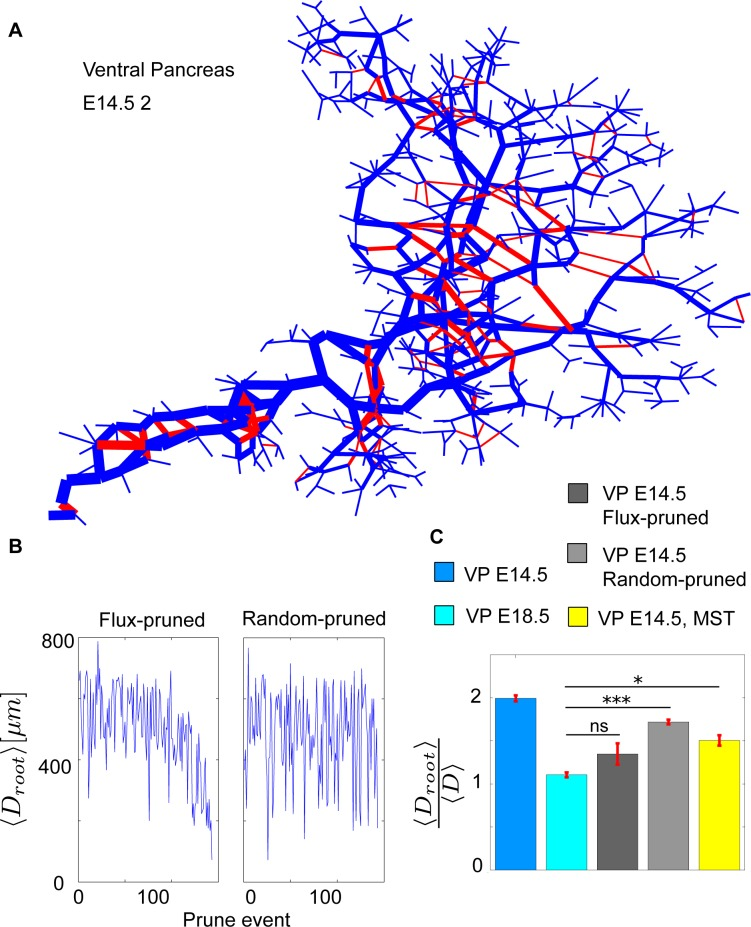 """Flux-based pruning of the VP14.5 networks. (A) The logarithm of the normalized flux at steady state of the E14.5 2 pancreas network. Thicker links indicate a higher flux. The highest flux is closest to the exit, with some interlinking nodes having very low flux. The links highlighted red are pruned by the pruning mechanism of least flux. (B) The pruning event's distance from the exit as pruning progresses for flux-based pruning and random pruning. (C) Average distance of all nodes to the exit scaled by the average distance between all nodes shown for the networks of E14.5, E18.5, the in silico pruned E14.5, and the E14.5 MST. Error bars represent SEM. Code files """"Import_Experimental_data"""", """"DiffusionOnNetwork"""", """"PruneBasedOnFlux"""", """"SnapShot"""", """"ConvertToAdjMat"""", """"ConvertToAdjList"""", """"NetworkProp"""", """"NetworkShapes"""", """"FindTriangles"""", """"Remove_kinks"""" are provided in supporting information ( S1 Data ). E, embryonic day; MST, minimum spanning tree; ns, not significant; VP, ventral pancreas."""