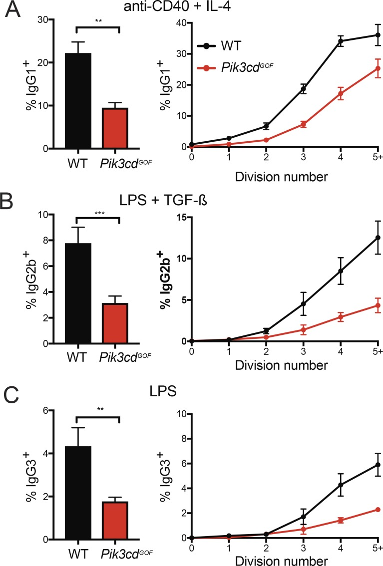 Pik3cd GOF B cells show a division-related decrease in switching to multiple IgG isotypes. (A–C) Follicular B cells (B220 + CD93 − CD23 + CD21 lo ) were sorted from the spleens of WT or Pik3cd GOF mice. Cells were labeled with CFSE and stimulated with anti-CD40 + IL-4 (A), LPS + TGF-β (B) or LPS alone (C) for 4 d after which they were stained for IgG1, IgG2b and IgG3 as shown. Left panels show total percentage of cells of each isotype. Right panels show the percentage of switched cells in each division as determined by CFSE. Plots show mean ± SEM, n = 4–6. Significant differences were determined by paired t tests. **, P