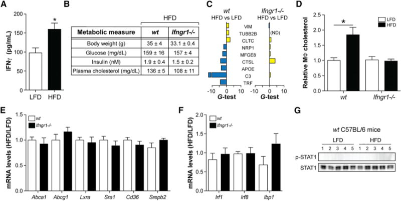 "Deleting Ifngr1 Corrects MSRN Proteins and Macrophage Cholesterol Levels in the ""Obesity/IR Only"" Model (A–G) WT and Ifngr1 −/− mice were fed a LFD or HFD for 9 weeks. (A) IFNγ production by splenic T cells in WT mice. (B) Metabolic parameters. (C–F) Peritoneal macrophage MSRN protein levels (C), cholesterol levels following treatment with 2% serum from WTD-fed Ldlr −/− mice (D), cholesterol metabolism gene levels (E), and IFNγ -target gene levels (F). (G) p-STAT1/STAT1 levels. Results are mean ± SEM. *p"