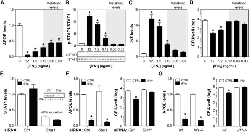 """Metabolic Disease Appropriate"" Doses of IFN γ Specifically Target MSRN Proteins (A–D) Macrophages were treated with varying levels of IFNγ. (A) APOE levels. (B) p-STAT1/STAT1 levels. (C) Irf8 levels. (D) Number of P. aeruginosa remaining after incubation with macrophages. (E) Efficiency of STAT1 knockdown in macrophages treated with control or Stat1 siRNA. STAT1 levels were quantified 30 min after IFNγ exposure. (F and G) Effects of IFNγ on APOE levels and number of P. aeruginosa remaining after incubation with siRNA control or siRNA Stat1 macrophages (F) and WT or Irf1 −/− macrophages (G). Results are mean ± SEM. *p"