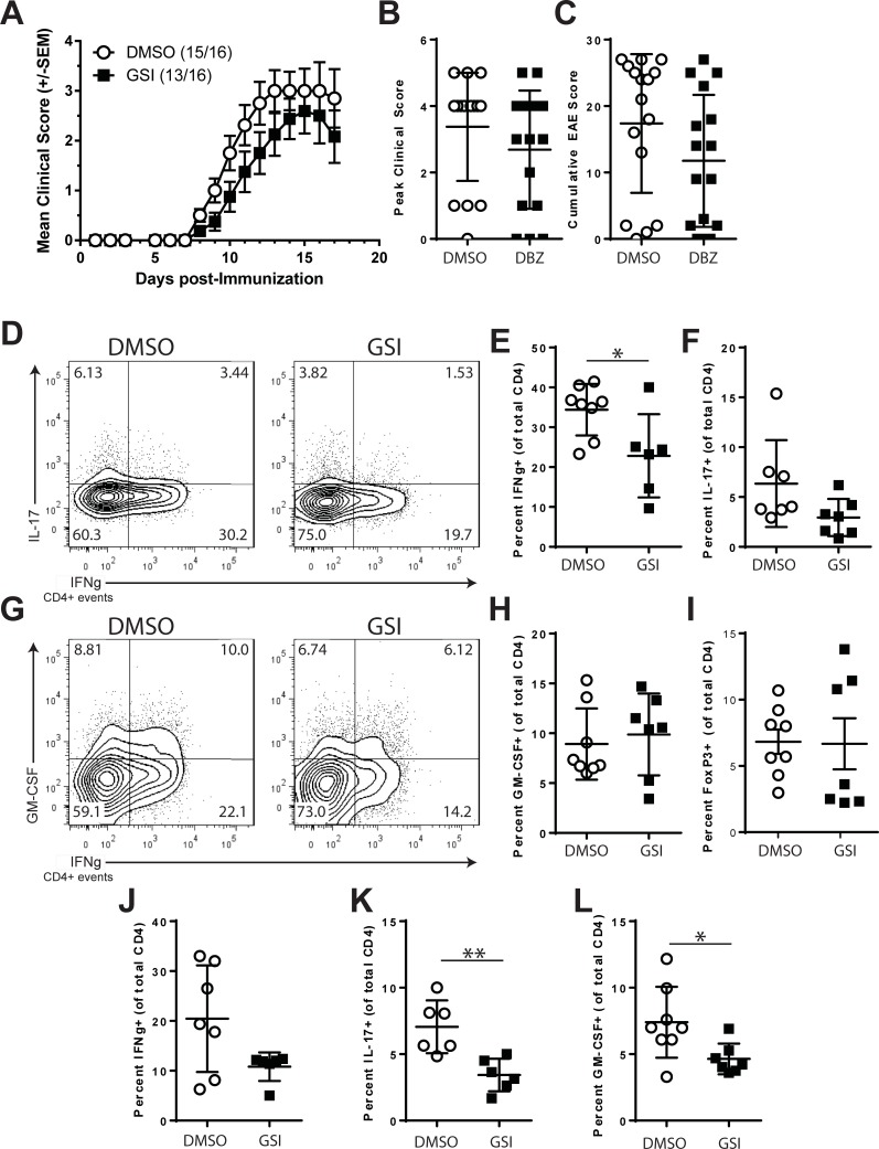 Gamma-secretase inhibitors alter Th1 and Th17 responses but do not inhibit EAE. B6 mice were immunized with MOG35-55 to induce active EAE. Beginning on the day after immunization, the mice were randomized and treated with DMSO or GSI every other day for 18 days. A. Clinical course of EAE. B. Peak clinical score of DMSO and GSI-treated mice. C. Cumulative EAE scores for DMSO and GSI-treated animals. T cell cytokine expression in CNS-infiltrating CD4+ T cells from DMSO or GSI-treated mice following the Peak of EAE. On day 17 post-immunization, CNS cells were isolated and intracellular cytokine staining performed. D. Expression of IL-17 and IFNγ. E. Expression of GM-CSF and IFNγ. Distribution of the percentages of cells expressing IFNγ (F), IL-17 (G), GM-CSF (H) or <t>FoxP3</t> (I) among CNS-infiltrating CD4+ T cells. J-L, Presence of cytokine expression in the spleens of EAE mice on day 17 post-immunization. Distribution of the percentages of cells expressing IFNγ (J), IL-17 (K), GM-CSF (L). Symbols indicate the percentage of cells from individual mice. Also plotted are the mean and SEM for each treatment group. Open circles indicate DMSO treatment, filled squares indicate treatment with GSI. Error bars represent SEM. Asterisks indicate significant differences (* p
