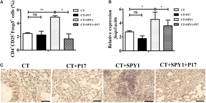 SPY1 vaccination activates the expression of regulatory T cells (Tregs) molecule Foxp3. (A) On day 7 after the last immunization, mice lungs were aseptically removed and homogenized, and single lung cell was stained with anti-mouse CD4-FITC and anti-mouse CD25-APC, followed by anti-mouse Foxp3-APC according to the manufacturer's instructions. Cells were analyzed using a Becton Dickinson FACSCalibur flow cytometer then. The percentages of CD4 + T cells which were CD25 + Foxp3 + Treg were calculated. (B) On day 7 after the last immunization, mice lungs were aseptically removed, and total RNA were extracted. Expression of foxp3 mRNA was analyzed by quantitative real-time PCR. Data were shown as mean ± SD from three independent experiments. (C) On day 7 after the last immunization, mice lungs were aseptically removed, and lung sections were stained with anti-FOXP3 antibody followed by streptavidin horseradish peroxidase chemistry. Then, the sections were examined under light microscopy at 100× magnification. Scale bar = 100 µm. Images were representative of staining observed in the lungs of mice within the group ( n = 4–6 mice). * p