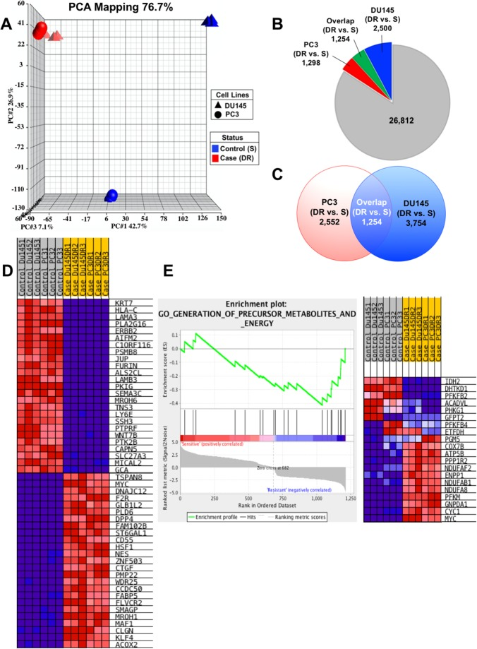 Gene expression profiling analysis reveals upregulation of CSC-associated genes (A) Principal component Analysis (PCA) mapping demonstrates clustering of DTX-resistant cell lines based on gene expression profiles. (B) Diagram showing the distribution of statistically significant differentially regulated genes in each cell line, comparing DTX-resistant (DR) to sensitive (S). (C) Diagram demonstrating the overlap or shared genes common to both PC3 and DU145 cells, comparing DR to S. (D) Heatmap of the top ranked genes generated using GSEA analysis on the common overlap genes between both sensitive PC3 and DU145 cells compared to PC3-DR and DU145-DR. Red represents fold upregulation and blue represents fold downregulation. (E) GSEA gene set pathway analysis revealed one pathway to be significantly enriched in the DTX-resistant PC3-DR and DU145-DR cells compared to sensitive PC3 and DU145 cells ( P = 0.032) involving precursor metabolites and energy. A positive value indicates correlation with the sensitive phenotype and negative value indicates correlation with the resistant phenotype.