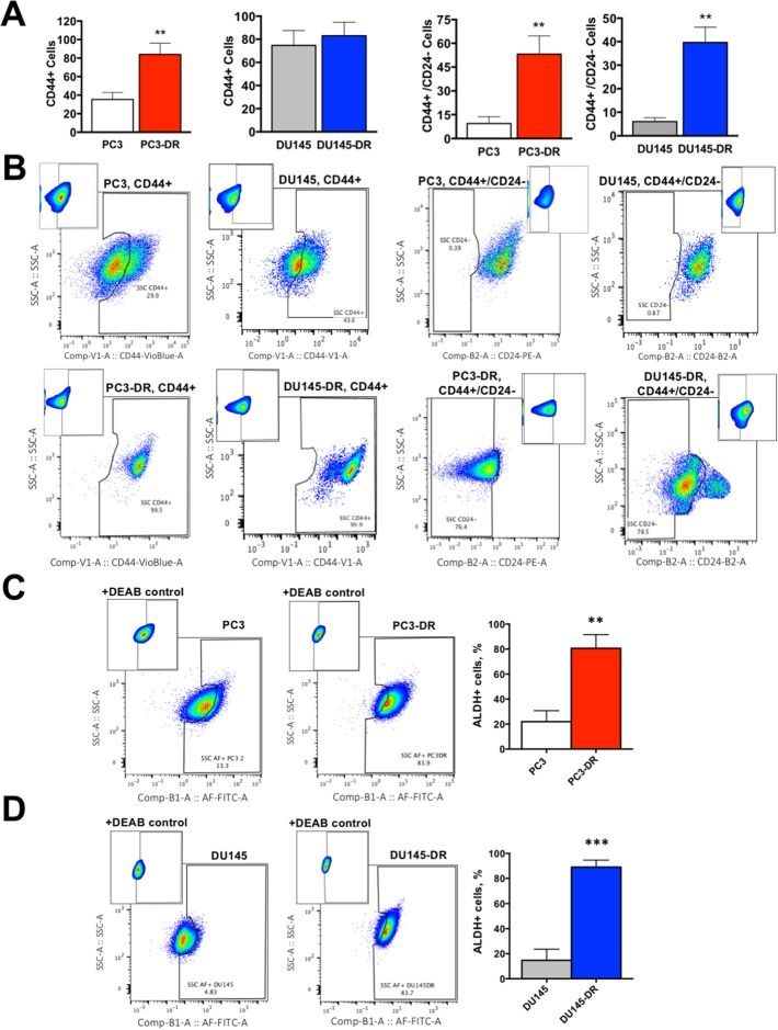 DTX-resistant mCRPC cells upregulate markers associated with CSC-like characteristics compared to DTX-sensitive cells (A) Percent of CD44+ and CD44+/CD24- cells for PC3 vs PC3-DR and DU145 vs DU145-DR, with (B) representative flow cytometry plots showing compensation windows used in the FMO analysis for each marker. Flow data is represented as frequency of live cells determined by annexin-V staining. (C) PC3-DR and (D) DU145-DR cells have significantly greater ALDH activity (Aldefluor+) compared with sensitive PC3 and DU145 cells as determined by aldefluor assay (+DEAB control used for gating). Representative flow plots are shown together with bar graphs. All flow measurements were acquired from at least 3 independent experiments conducted separately. ** P