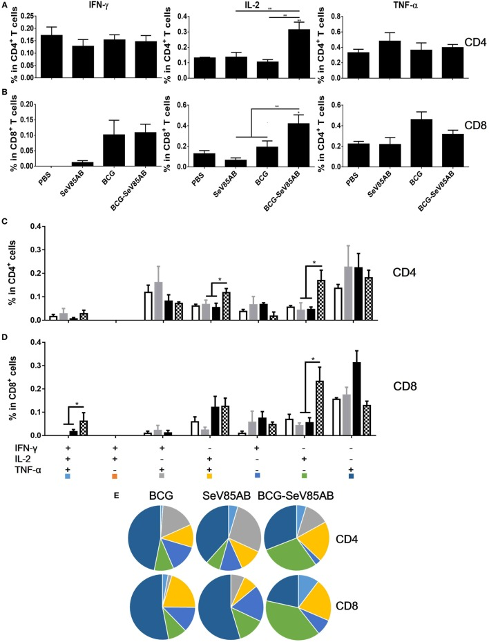 Recall T cell responses against specific stimulation post Mycobacterium tuberculosis challenge determined by ICS assay. The immunization and infection schedule were described in Figure 6 A. Lung cells were stimulated ex vivo with Ag85AB peptides in the presence of monensin and brefeldin A and analyzed for cytokine production by ICS assay. T cells producing IFN-γ, IL-2, and TNF-α were analyzed and their percentage in CD4 + T cells (A) and CD8 + T cells (B) are shown. The percentage of seven subpopulations based on the production of three cytokines in any combination in the total CD4 + (C) and CD8 + (D) T cells and the pie chart analysis (E) are shown. Significant differences in frequency of T cell subsets are indicated. Data are representative of two independent experiments with three mice per group. * P