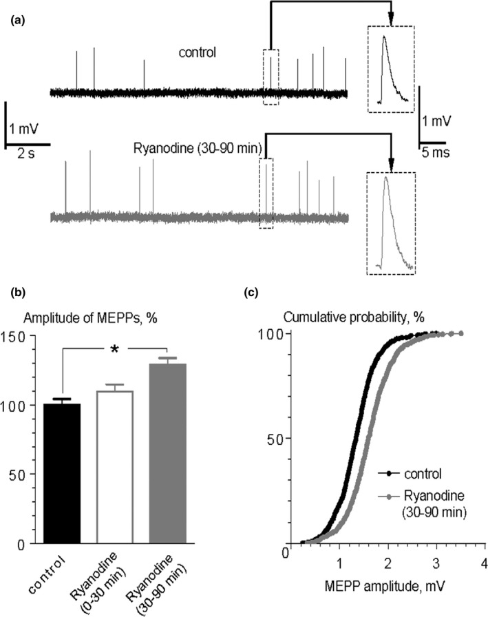 An increase in MEPP amplitude in the presence of <t>ryanodine.</t> (a) Representative intracellular recordings of MEPP s in control and in the presence of ryanodine (0.1 μM). Insets show the enlarged views of MEPP s. (b) Mean amplitude of MEPP s in control ( n = 23), during first 30 min of ryanodine application ( n = 15) and within 30–90 min of ryanodine application ( n = 28). * p