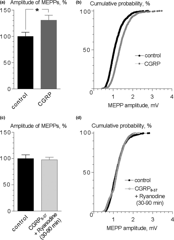 CGRP mediates the ryanodine‐induced increase in MEPP amplitude. (a) Mean amplitude of MEPP s in control ( n = 16) and during application of exogenous CGRP (10 nM ) for 40 min ( n = 18). * p