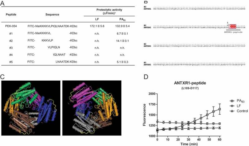 PA 83 cleavage specificity and its potential role in ANTXR1 receptor binding. Hydrolysis of <t>FRET-peptide</t> PEK-054 and its derivatives using 20 µg/mL PA 83 or LF a No hydrolysis: n.h. (A). ANTXR1 sequence alignment was performed using software programs ClustalW and ESPript 3.0 (Risler matrix, global score of 0.7). Sequence overlap between ANTXR1 and the peptide is depicted in red (B). Presence of the KVLP-region on the outside of the ANTXR1 protein is marked yellow. The 3D structure of the protein was generated using the Cn3D 4.3 program (C). Hydrolysis of ANTXR1 peptide (L109-D117) using 20 µg/mL PA 83 , 20 µg/mL LF or <t>HEPES</t> buffer (D). Results are expressed as mean ± SEM ( n = 3).