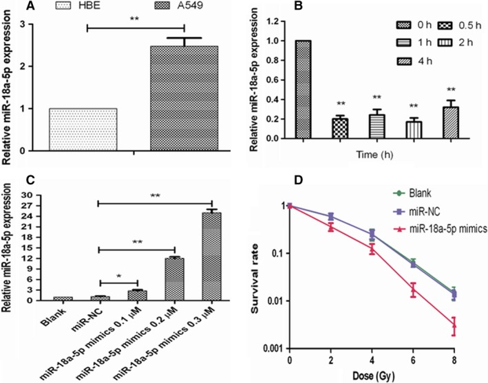 Radiosensitizing effects of miR‐18a‐5p on A549 cells. A, miR‐18a‐5p expression in HBE and A549 cells (** P
