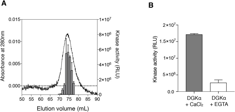 """Purified DGKα is catalytically active and positively regulated by Ca 2+ . (A) Luminescence-based (ADP-glo) kinase activity assay of fractions from size exclusion chromatography of DGKα. Five microliters from each fraction containing 38.5–363 ng of DGKα was added for a reaction and the following details are described in """"Materials and Methods."""" Luminescence values are presented as relative luminescence unit (RLU) over background signals from a well containing a buffer (20 mM Tris–HCl, pH 7.4, 0.2M NaCl, 3 mM CaCl 2 , 3 mM MgCl 2 , 0.5 mM DTT, and 5% glycerol) used for size-exclusion chromatography. (B) Calcium-dependent activity of the purified DGKα. The luminescence-based DGK activity assay was conducted using 150 ng of DGKα in the presence of CaCl 2 (0.6 mM) and EGTA (3.6 mM). Purified DGKα was pre-incubated with 3 mM EGTA for 30 min on ice to chelate CaCl 2 contained in a buffer used for size exclusion chromatography, and concentrated EGTA was also added into the reaction mixture at a final concentration of 3.6 mM. Measured luminescence values of DGKα in the presence of CaCl 2 or EGTA were subtracted with each negative control (CaCl 2 or EGTA) and data shown are mean ± SD for triplicate measurements."""