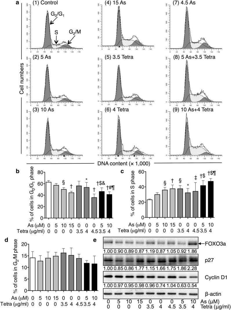 "Effects of As III and Tetra, alone or in combination, on the cell cycle profiling and the expression level of cell cycle related-proteins in MDA-MB-231 cells. a – d After treatment with various concentrations of As III (5, 10 and 15 µM), and Tetra (3.5, 4 and 4.5 µg/ml), alone or in combination (5 µM As III + 3.5 µg/ml Tetra, 10 µM As III + 4 µg/ml Tetra), for 48 h, cell cycle profiling was performed by FACSCanto flow cytometer as described under "" Materials and methods "". Analyzed data and profiles for each G 0 /G 1 and G 2 /M phase using Diva software and ModFit LT™ ver. 3.0. are shown in the gray area. Cells at S phase are shown as shaded area. A representative FACS histogram from three separate experiments is shown. Significant difference between control and treatment with As III and Tetra, alone or in combination, are shown (* p"
