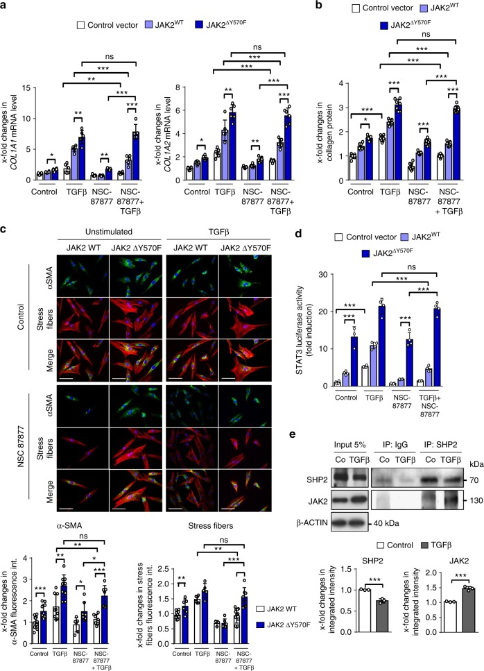 Overexpression of JAK2 ∆Y570F prevents the inhibitory effects of SHP2 inhibitors on TGFβ-induced fibroblast activation. a mRNA levels of COL1A1 and COL1A2 (TGFβ 10 ng/ml for 24 h) ( n ≥ 5). b Release of collagen protein (TGFβ 10 ng/ml for 24 h) ( n ≥ 6). c Representative images of immunofluorescence stainings for α-SMA and stress fiber at 400-fold magnification and respective quantifications (TGFβ 10 ng/ml for 24 h) ( n ≥ 6). Horizontal scale bar, 500 μm. d STAT3 reporter Assay upon JAK2 WT and Y570F mutant overexpression. Cells were treated with TGFβ (10 ng/ml for 6 h) and NSC-87877 (100 µM) ( n ≥ 4). e Co-immunoprecipitation and respective quantifications of endogenous JAK2 with endogenous SHP2 in human fibroblasts stimulated with TGFβ (10 ng/ml for 30′) ( n = 3). Results shown are representative of ≥ 3 independent experiments. All data are presented as median ± s.e.m. The p values are expressed as follows: 0.05 > p > 0.01*; 0.01 > p > 0.001**; p