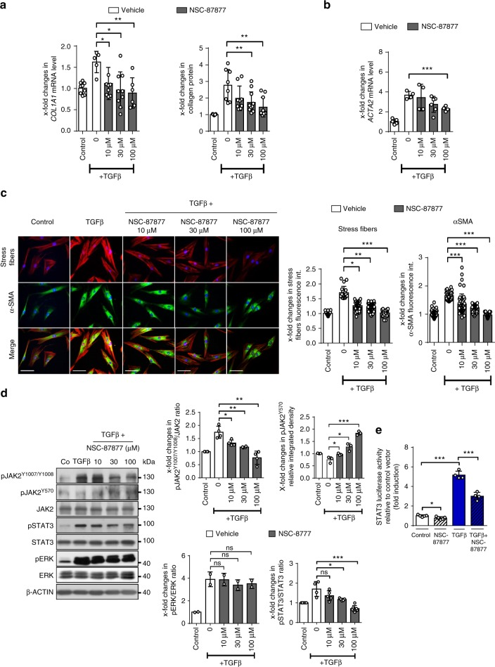 Inhibition of SHP2 limits JAK2/STAT3 signaling and fibroblast activation. a Changes in the mRNA levels of COL1A1 and of collagen protein in human fibroblasts incubated with increasing doses of NSC-87877 (10 µM, 30 µM and 100 µM). Fibroblasts were treated with TGFβ (10 ng/ml) for 24 h. b ACTA2 mRNA. ( n ≥ 4) c Representative images of immunofluorescence stainings for α-SMA and stress fiber staining are shown at 400-fold magnification and quantification of α-SMA staining intensity as well as stress fiber staining intensity ( n ≥ 15) (TGFβ 10 ng/ml for 24 h). Horizontal scale bar, 500 μm. d Representative western blots for pJAK2 Y1007/Y1008 , pJAK2 Y570 , total JAK2, pSTAT3 Y705 and total STAT3 with β-actin as loading control and quantification of the results (TGFβ 10 ng/ml for 6 h) ( n ≥ 2). e Changes in STAT3 reporter activity ( n ≥ 6) (TGFβ 10 ng/ml for 6 h). Results shown are representative of three independent experiments All data are presented as median ± s.e.m. The p values are expressed as follows: 0.05 > p > 0.01*; 0.01 > p > 0.001**; p