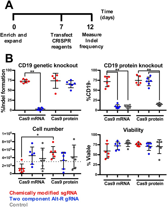 B cells are efficiently edited by CRISPR/Cas9. ( A ) B cells were enriched and isolated, electroporated with either chemically modified sgRNA or Alt-R gRNA in combination with either Cas9 protein or chemically modified mRNA encoding Cas9 protein, and then assessed for indel formation (n = 6). ( B ) Frequency of indel formation as measured by TIDE analysis ( left panel ) and loss of CD19 expression as measured by flow cytometry ( right panel ), viability ( left panel ) and total cell numbers ( right panel ) (*indicate p