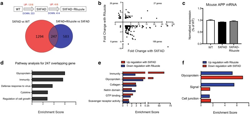 Treatment of 5XFAD mice with riluzole rescues gene expression changes in the hippocampus. a Venn diagram illustrating the overlap of 247 genes that were changed in 5XFAD compared to wild type and in 5XFAD mice treated with riluzole compare to untreated mice. b Scatter plot illustrating the 247 overlapping genes showing fold change by 5XFAD ( x -axis) against fold change with riluzole treatment on 5XFAD mice ( y -axis). 86% of overlapping 5XFAD genes is reversed by riluzole treatment. The upper left quadrant represents 26 genes that had decreased expression with 5XFAD and increased expression after riluzole treatment. Conversely, the lower-right quadrant illustrates 189 genes that were increased with 5XFAD and decreased by riluzole. c The mRNA expression of Mouse APP from RNA-Seq data revealed no significant difference among WT, 5XFAD, and 5XFAD-Riluzole groups. d Histograms illustrating significantly enriched pathways based on genes differentially expressed by overlapping gene. (enrichment score > 1.3). e , f Histograms illustrating significantly enriched pathways with the highest sum enrichment scores across opposite conditions (Increased in 5XFAD and Decreased with riluzole treatment or vice-versa) based on differentially expressed genes (enrichment score > 1.3). Similar pathways and enrichment scores were observed when comparing genes decreased by 5XFAD and increased by riluzole, as well as for genes increased with age and decreased by riluzole. The RNA-Seq data is based on hippocampal tissue pooled into three replicate sequencing libraries/group from WT, n = 10 (pooled 3, 3, 4 mice); 5XFAD, n = 7 (pooled 2, 2, 3 mice); and 5XFAD-Riluzole, n = 8 (pooled 2, 3, 3 mice)