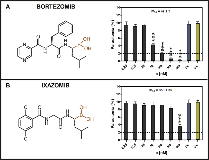 Treatment of B. divergens ex vivo cultures with peptide boronic acid inhibitors. Structure and IC 50 determination of (A) bortezomib and (B) ixazomib. Results represent means of three independent biological replicates, error bars indicate standard deviations. Smears were stained using DiffQuik staining set, parasitemia was counted at 1000 RBCs. Statistical analysis was performed in R using ANOVA (Kolmogorov Smirnov test and the Bartlett test passed): * = p