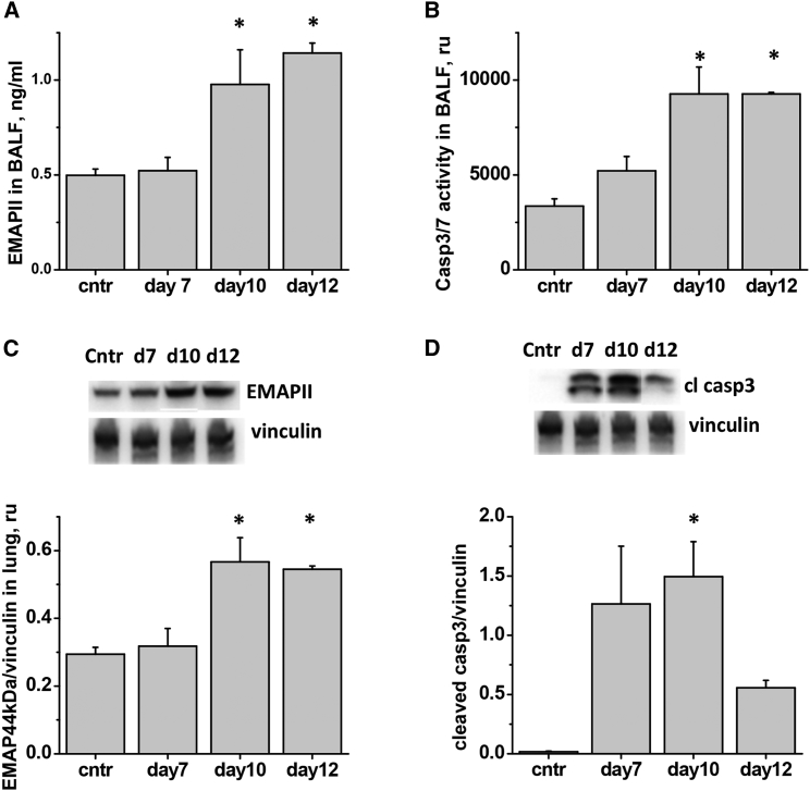 IAV-Induced Lung Injury Is Accompanied by EMAPII Release and Induction of Pulmonary Apoptosis Mice were administered 750 pfu/mouse IAV to lung and analyzed for (A) BALF level of EMAPII, (B) BALF level of caspase 3/7 activity, (C) lung levels of EMAPII, (D) lunglevels of cleaved caspase 3. n= 7 for control group and 3–4 for all other groups; data are presented as mean± SEM. *p