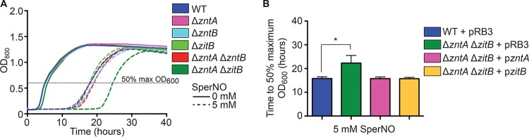 Zinc efflux by ZntA and ZitB is required for S. Typhimurium resistance to nitrosative stress in vitro . (A) Single zinc efflux mutants (pink, aqua, and light green) and a Δ zntA Δ zntB double mutant (red) were no more sensitive to NO· generated by the donor spermine NONOate (SperNO) than wild-type cells (blue). However, a Δ zntA Δ zitB double mutant (green) exhibited significantly delayed growth, indicating enhanced NO· sensitivity (*, P