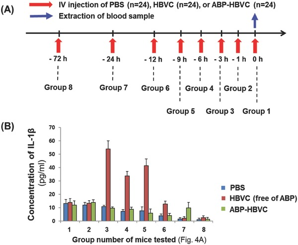 Concentration of serum IL‐1β in live mice injected with ABP‐HBVC and HBVC (free of ABPs). A) Time schedule of IV injection of PBS (negative control), HBVC (50 µg), and ABP‐HBVC (50 µg) to C57BL/6 mice ( n = 72). B) Results of time‐course ELISA to measure serum IL‐1β in live mice of (A).