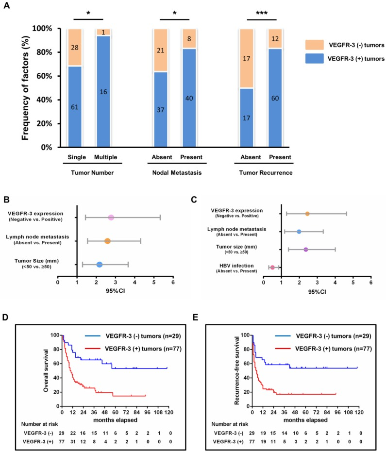 Impact of <t>VEGFR-3</t> expression on survivals and clinicopathological characteristics and its clinical significance in patients with iCCA. (A) Patients with VEGFR-3-positive tumors showed more frequently multiple tumor numbers (chi-square-test, p =0.030), lymph node metastasis (chi-square-test, p =0.025) and tumor recurrence (chi-square-test, p