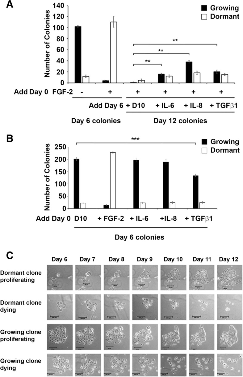 Exogenous recombinant human IL-6, IL-8 and TGFβ1 induce reactivation of dormant breast cancer colonies but do not promote growth of growing colonies. a Cytokines induce regrowth of dormant colonies. One thousand MCF-7 cells were incubated in fibronectin-coated wells with FGF-2 for 6 days, followed by addition of recombinant human IL-6, IL-8 and TGFβ1 on day 6 and incubation for an additional 6 days, as described. Cells were stained with 0.1% crystal violet and growing and dormant colonies were counted on day 6 and 12. b Cytokines do not promote the growth of growing colonies. MCF-7 cells were incubated in fibronectin-coated wells with FGF-2 or recombinant human IL-6, IL-8 or TGFβ1, as described. Cells were stained with 0.1% crystal violet and growing and dormant colonies were counted on day 6. c Time lapse photography demonstrating regrowth potential of dormant clones. Photographs demonstrate growth expansion or degradation of both dormant and growing colonies. MCF cells were incubated on fibronectin-coated plates without and with FGF-2 for six days, followed by an additional 6 day incubation with fresh DMEM/10% FCS without or with rhIL-6, IL-8 and TGFβ1, as described. Time-lapse microscopic images of the same individual colonies in the same fields were obtained once daily for these six days. Size markers are 200 μM