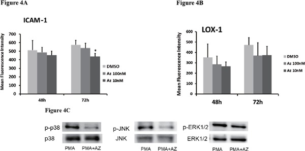 Expressions of (A) ICAM-1 or (B) LOX-1 in THP-1 cells were measured by flow cytometry. * p