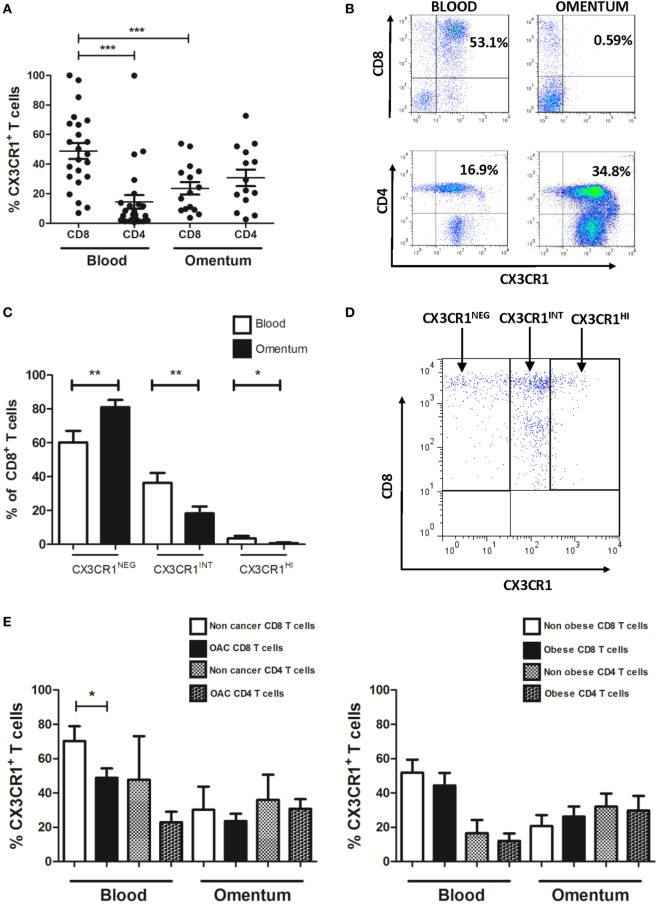 Frequencies of CX3CR1 + CD8 + T cells are significantly lower in omentum of esophagogastric adenocarcinoma (EAC) patients compared to frequencies of both peripheral blood CX3CR1 + CD8 + T cells and CX3CR1 + CD4 + T cells. Peripheral blood mononuclear cells and stromal vascular fraction of omentum were isolated from EAC patients. (A) Scatterplots show the frequencies of CX3CR1 + CD8 + and CD4 + T cells in the blood and omentum of a total of 24 EAC patients. (B) Representative dot plots of CX3CR1 + CD8 + and CX3CR1 + CD4 + T cells (gated on and shown as a percentage of total CD3 + population) in blood and omentum. (C) Bar chart showing the frequencies of CD8 + cells expressing no CX3CR1 (CX3CR1 NEG ), intermediate (CX3CR1 INT ), and high levels of CX3CR1 (CX3CR1 HI ) in the blood (white) and omentum (black) of 24 EAC patients. (D) Representative dot plot of circulating CD8 + T cells expressing no CX3CR1 (CX3CR1 NEG ), intermediate levels of CX3CR1 (CX3CR1 INT ), and high levels of CX3CR1 (CX3CR1 HI ). (E) Bar charts showing the CX3CR1 + CD8 + and CD4 + T cells in the blood and omentum of 8 non-cancer control subjects and 24 EAC patients (left) and 14 non-obese and 10 obese EAC patients (right). * p