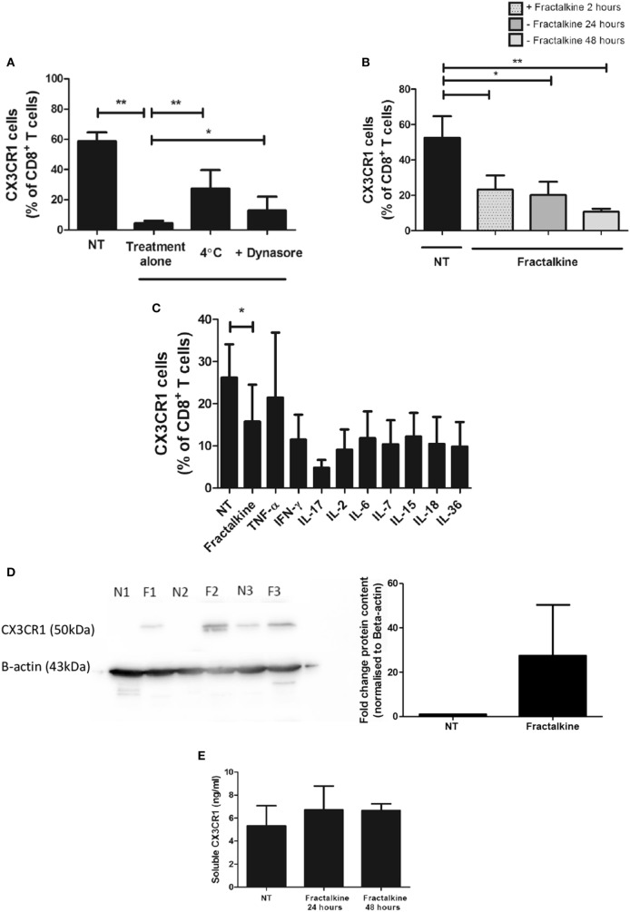CX3CR1 is endocytosed following fractalkine treatment and is not subsequently recycled to the surface of CD8 + T cells or secreted but, intracellular accumulations of the protein are detectable. (A) Frequencies of CX3CR1 + cells, as a percentage of CD8 + T cells following treatment with M199 media alone (NT), 30 ng/ml recombinant fractalkine alone (treatment alone), 30 ng/ml recombinant fractalkine at 4°C and 30 ng/ml recombinant fractalkine plus 80 µM Dynasore ( n = 10). (B) Bar chart showing frequencies of CX3CR1 + cells, as a percentage of CD8 + T cells following treatment with M199 media alone (NT) or 30 ng/ml of recombinant fractalkine for 24 h (fractalkine, light gray dot pattern) followed by removal from a fractalkine-free environment for 24 h (fractalkine, dark gray no pattern) or 48 h (fractalkine, light gray no pattern) ( n = 6). (C) Bar chart showing frequencies of CX3CR1 + cells, as a percentage of CD8 + T cells following treatment with M199 media alone (NT) or 30 ng/ml of recombinant fractalkine for 24 h (fractalkine, light gray dot pattern) followed by removal from a fractalkine-free environment for 24 h and treatment with 50 ng/ml of TNF-α, 100 ng/ml of IFN-γ, IL-17, IL-6, IL-7, IL-15, IL-18, IL-36, and 50 U/ml of IL-2 ( n = 3). (D) Western Blot (left) showing CX3CR1 and beta-actin protein in peripheral blood-derived CD8 + T cells from three donors following 24 h of no treatment (N1, N2, and N3) or fractalkine treatment (F1, F2, and F3) and densitometry data (right) from this western blot displayed as fold change bar chart. (E) Soluble CX3CR1 levels in the supernatant of peripheral blood mononuclear cells treated with M199 alone or fractalkine for 24 or 48 h ( n = 3). * p